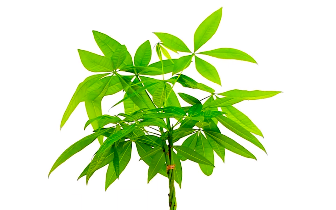 Even a Village Leaf needs a magic money tree from time to time – Please support us