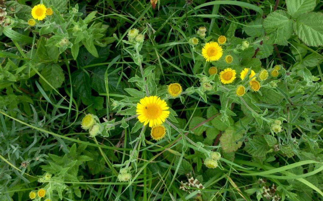 WILD ABOUT WARBLETON – Biodiversity ideas on show