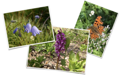 VALUE YOUR VERGE . . . a message from Wild About Warbleton